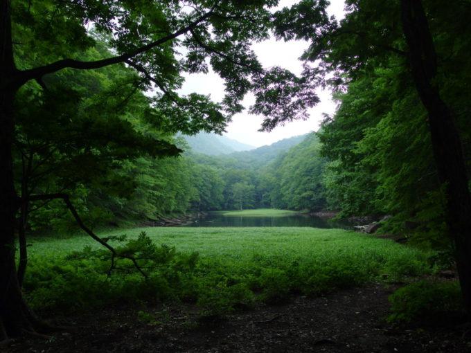 夏の青森蔦沼遊歩道雨に煙る幻想的な長沼