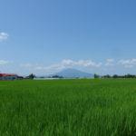 青い田園の先に聳える岩木山