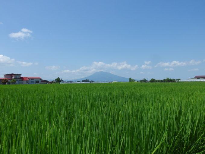 夏の田舎館青い稲穂をつけた田んぼ越しに眺める津軽富士