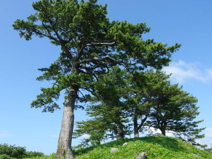 象潟九十九島めぐり島に生える立派な松