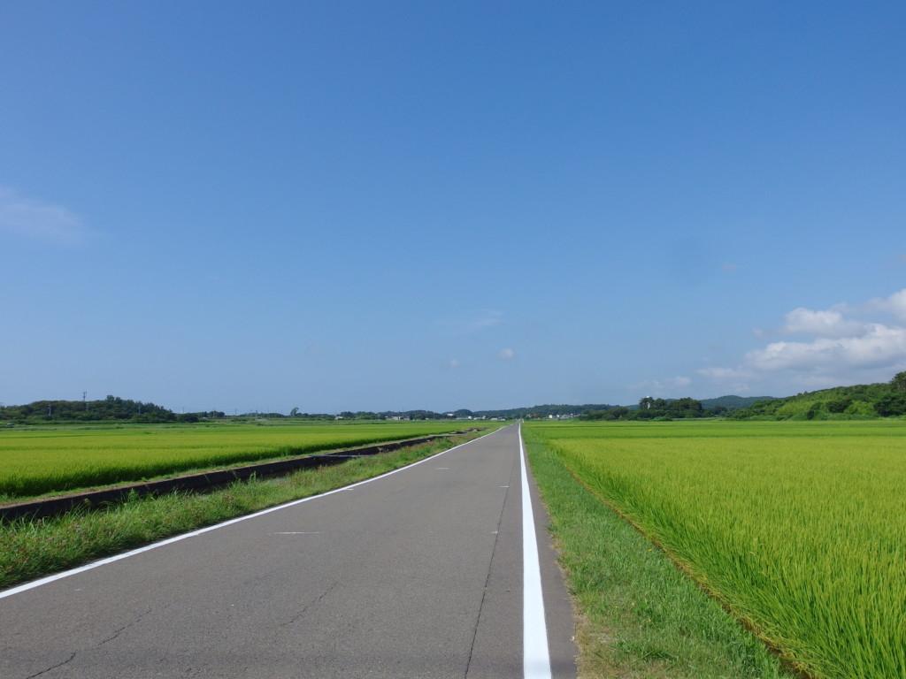 象潟九十九島めぐりを終え金浦温泉まで歩くまっすぐな道