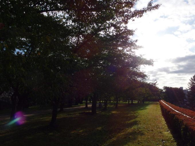 秋の盛岡朝日に染められる岩手公園桜並木