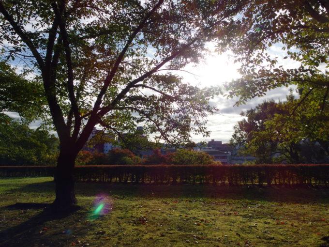 秋の盛岡城跡公園朝日に透かされる桜と苔
