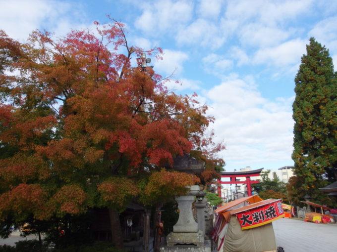 秋の盛岡八幡宮参道沿いに色付き始める大きなもみじ