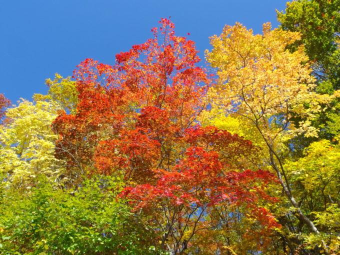 休暇村岩手網張温泉思い思いの色に染まる紅葉