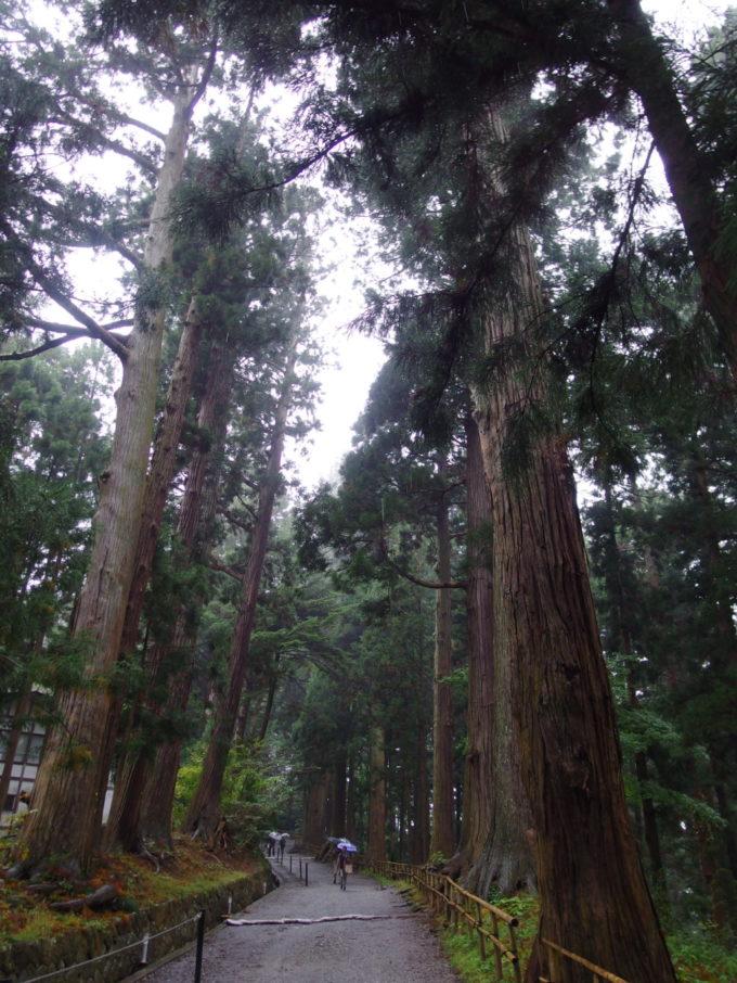 秋の平泉中尊寺雨に煙る月見坂の杉並木