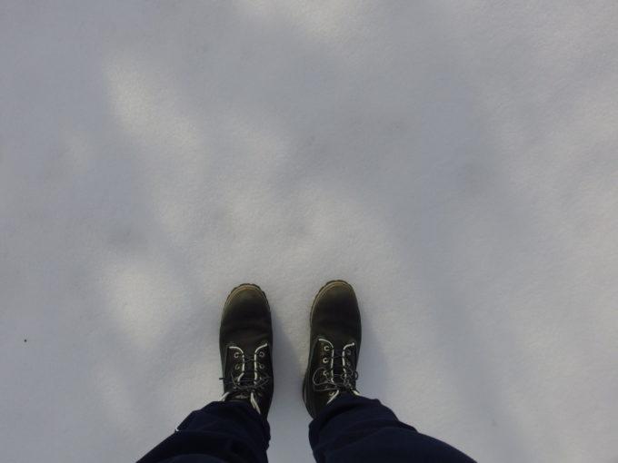 冬の弘前お堀端の純白の雪