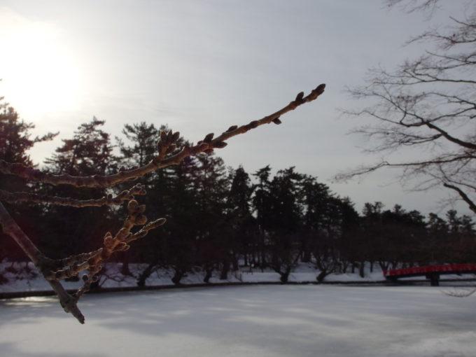 冬の弘前蕾の固いお堀の桜