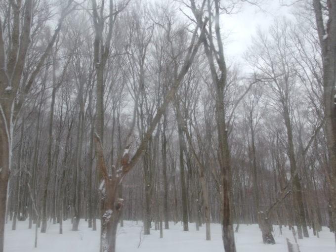 例年より雪の少ない冬の八甲田酸ヶ湯への道