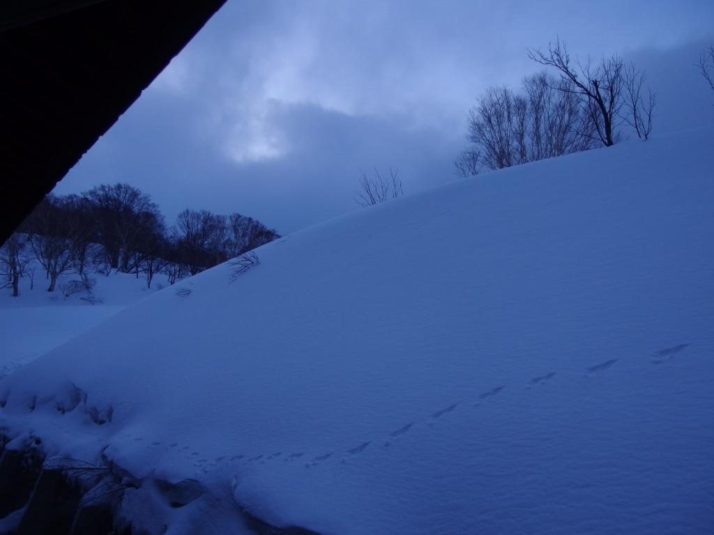 雪の少ない冬の酸ヶ湯温泉旅館青白さに包まれる静かな朝