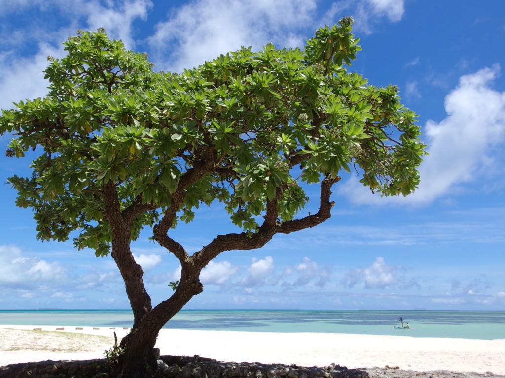 6月下旬人のいない竹富島最高な青さのコンドイビーチ