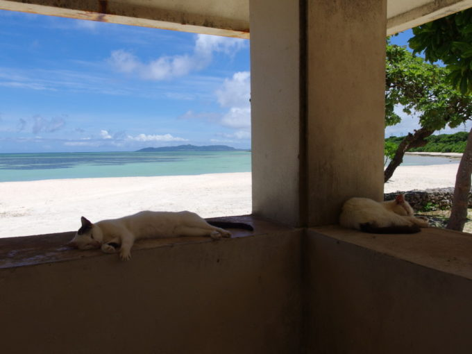 6月下旬人のいない竹富島静かなコンドイビーチの東屋で昼寝する猫たち