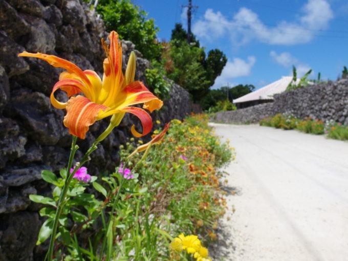 6月下旬人のいない竹富島珊瑚の石垣の下に咲く美しい百合