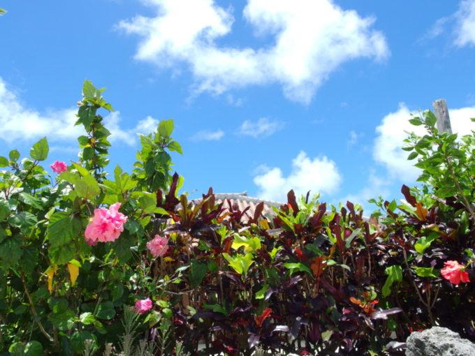 6月下旬人のいない竹富島赤瓦を彩る八重咲きのハイビスカス
