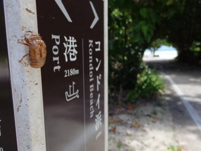 6月下旬人の少ない竹富島道しるべに残されたセミの抜け殻