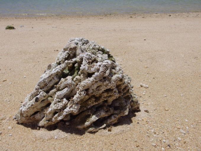 6月下旬人の少ない石垣島整備中の真栄里ビーチに落ちている大きな珊瑚
