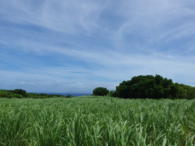 6月下旬人の少ない有人島日本最南端波照間島風に揺れるさとうきび畑越しに眺める青い海
