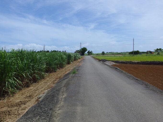 6月下旬人の少ない有人島日本最南端波照間島レンタサイクルでさとうきび畑を走る