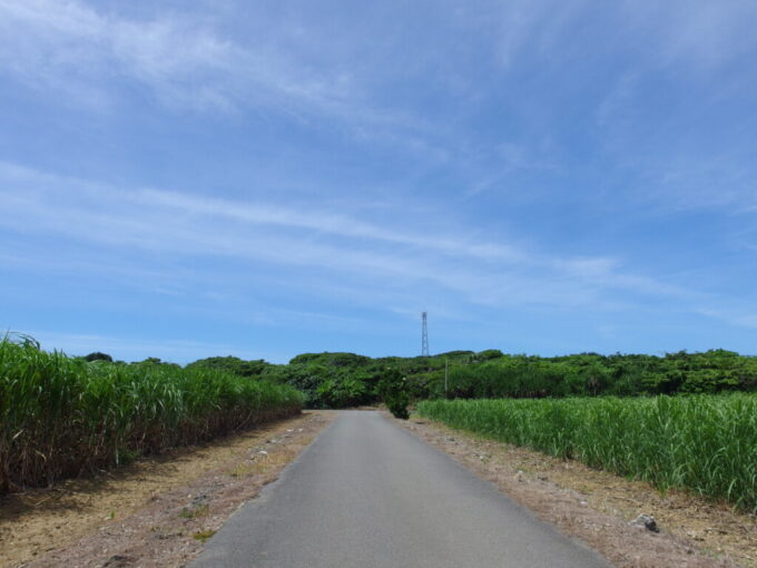 6月下旬人の少ない有人島日本最南端波照間島どこまでも続くさとうきび畑の中自転車をこぐ