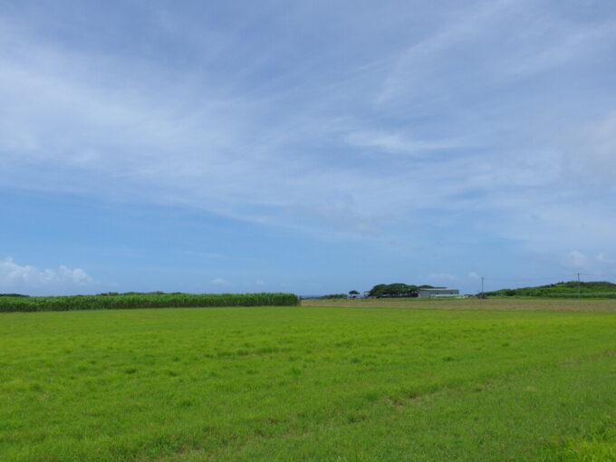 6月下旬人の少ない有人島日本最南端波照間島草原の先に佇む牛