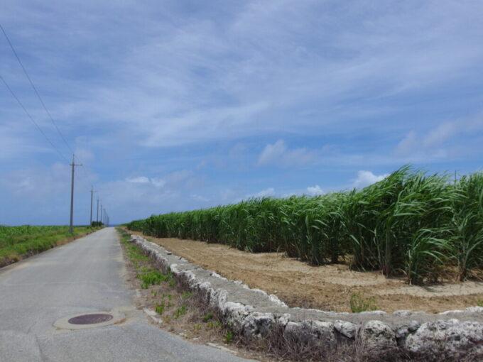 6月下旬人の少ない有人島日本最南端波照間島風になびくさとうきび