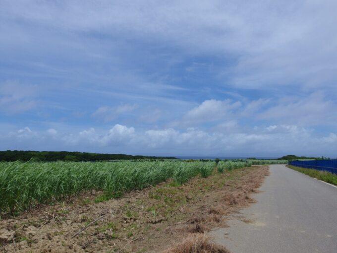 6月下旬人の少ない有人島日本最南端波照間島さとうきび畑をぬってニシ浜へ