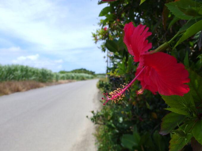 6月下旬人の少ない有人島日本最南端波照間島ハイビスカスの咲く木陰で小休止