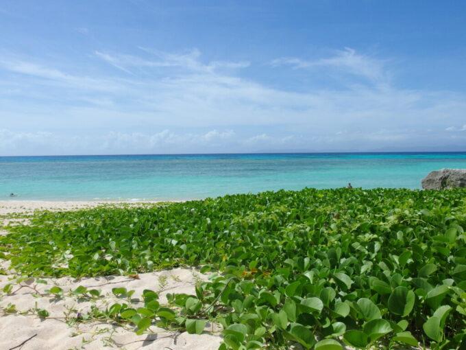 6月下旬人の少ない有人島日本最南端波照間島ニシ浜を緑に染めるハマヒルガオ