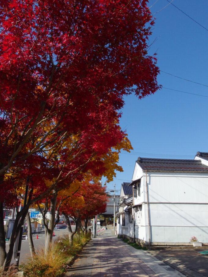 11月中旬の長野グラデーションに染まる見事な紅葉並木