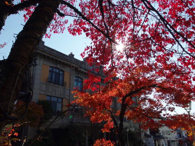 11月中旬鮮やかな紅葉に染まる長野善光寺さんの参道