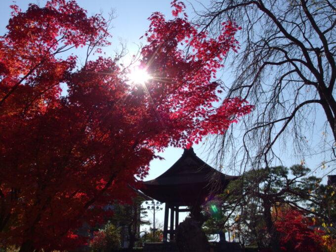 11月中旬信州善光寺さんの鐘楼を彩る鮮やかな紅葉