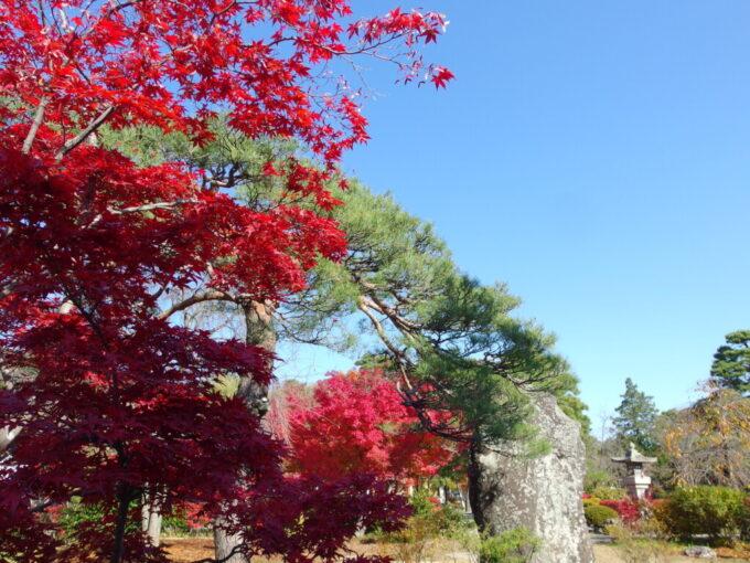 11月中旬信州善光寺秋晴れの空に際立つ紅葉の色