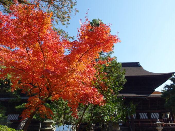 11月中旬の信州善光寺渋い檜皮葺と紅葉の競演