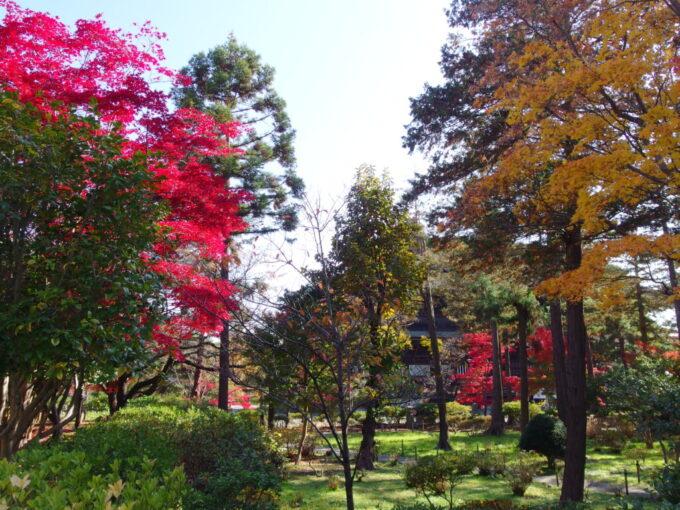 11月中旬信州善光寺苔むす庭園を染める錦秋