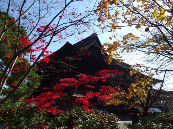11月中旬信州善光寺渋い本堂と紅葉の対比