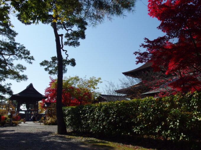 11月中旬信州善光寺紅葉を愛でつつ本堂の周りを一周