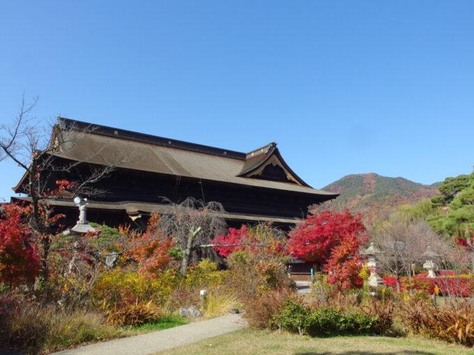 11月中旬信州善光寺秋色の山を背負う本堂