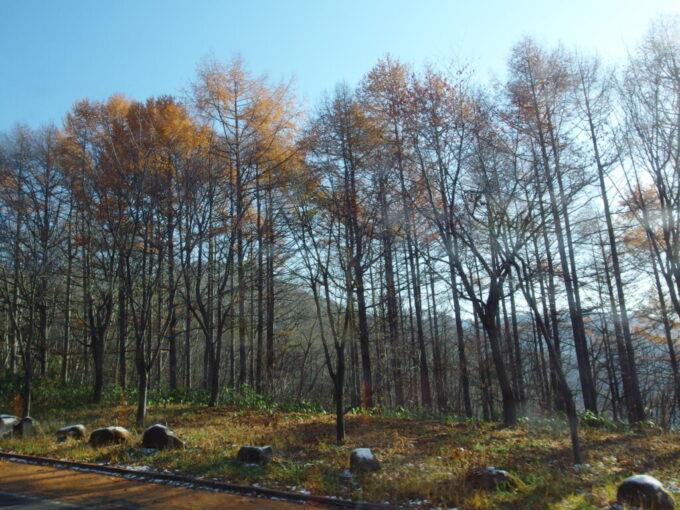 11月中旬秋の志賀草津高原ルート長電バス車窓に流れる秋色の落葉松