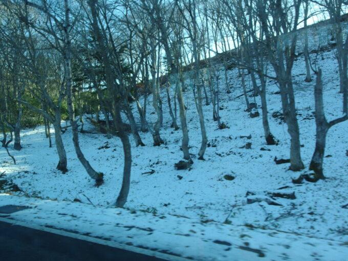 11月中旬志賀草津高原ルート山肌を染める雪