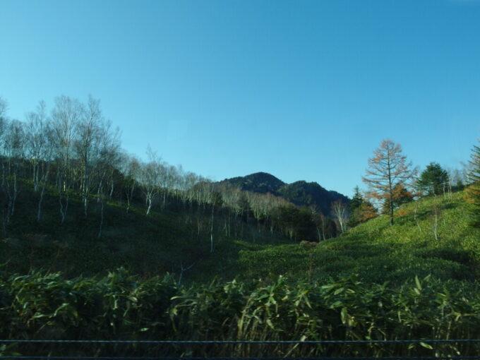 11月中旬白樺と笹の続く志賀草津高原ルート