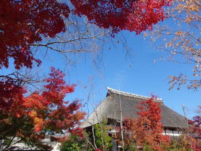 11月中旬の小布施立派な茅葺屋根と色づく紅葉