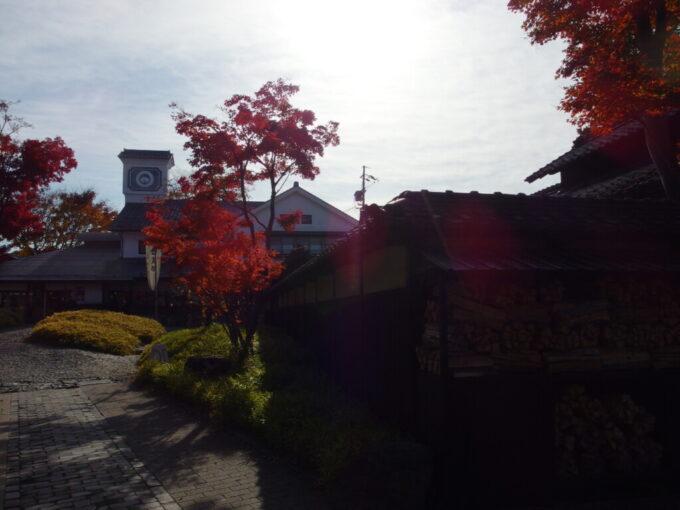 11月中旬の小布施西日に照らされる紅葉