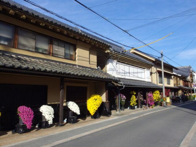 11月中旬の須坂蔵の町並みに並ぶ立派な菊