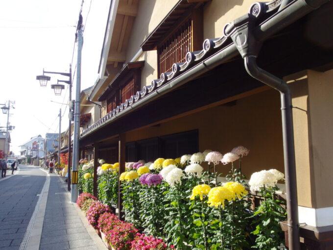 11月中旬の須坂蔵の町並み西日に輝く菊